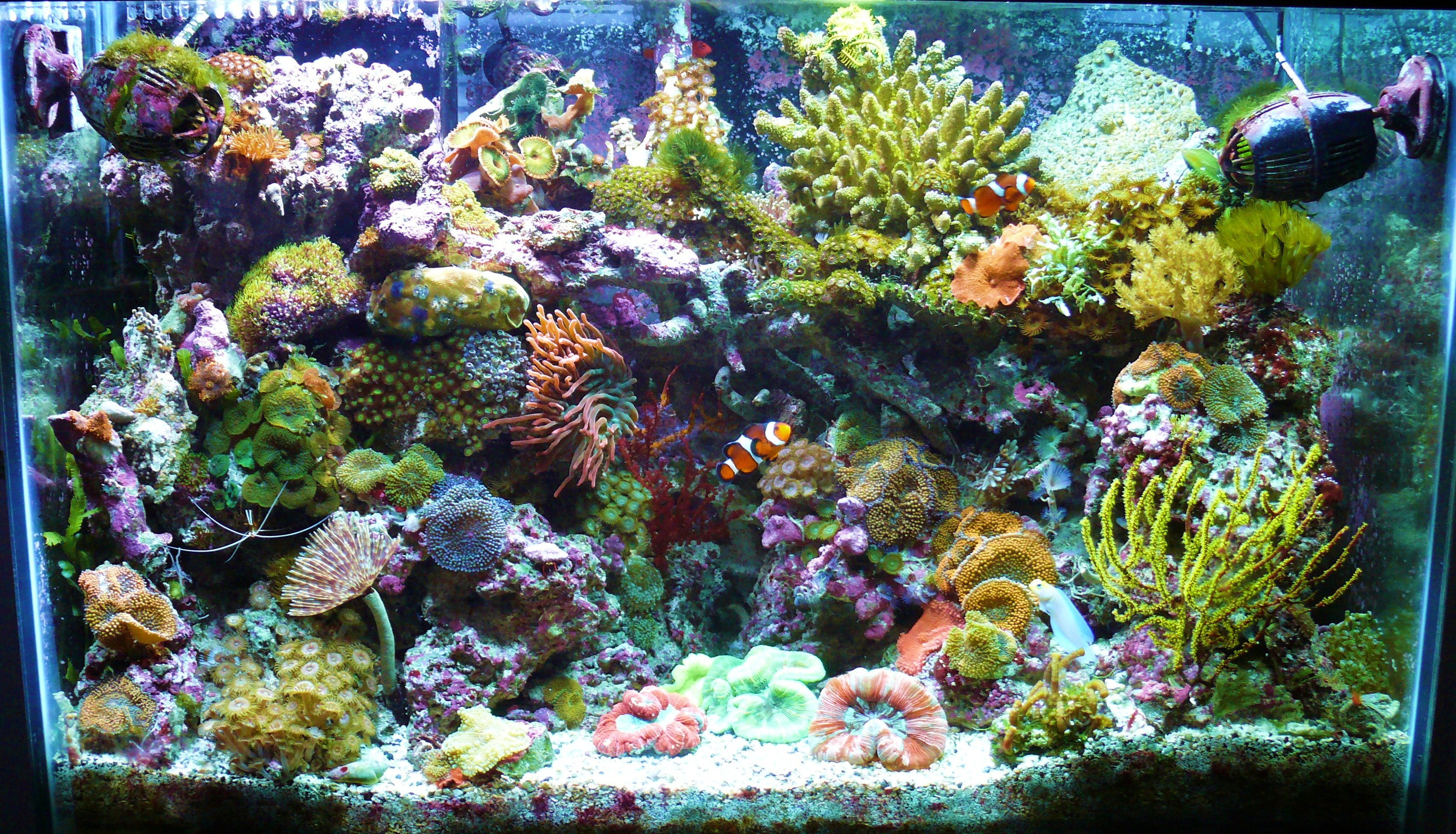 Reef page for Seahorse fish tank